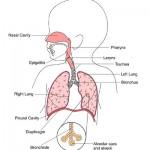 Neukroćena goropad (problem sa bronhitisom)