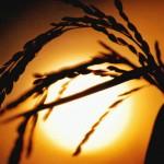 Snaga, energija, izdržljivost i vitkost – Kakva nam hrana daje snagu?