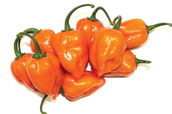 Habanero ljuta paprika i smrt